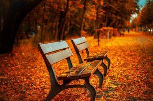 bench-560435_640-300x199 (2)